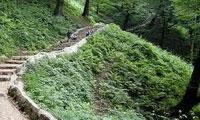 جنگلهای مازندران