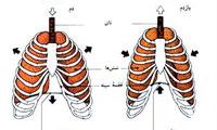 تنفس صحیح حین ورزش