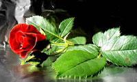 اهمیت و جایگاه محبت (1)