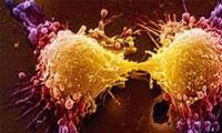 سرطان تا چه حد ژنتیک است