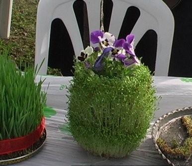 سبزه ج سبزه عروسکی، قالبی و درختچه ای برای هفت سین