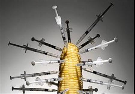 محصولات تراریخته عامل شیوع بسیاری از بیماری ها از جمله سرطان
